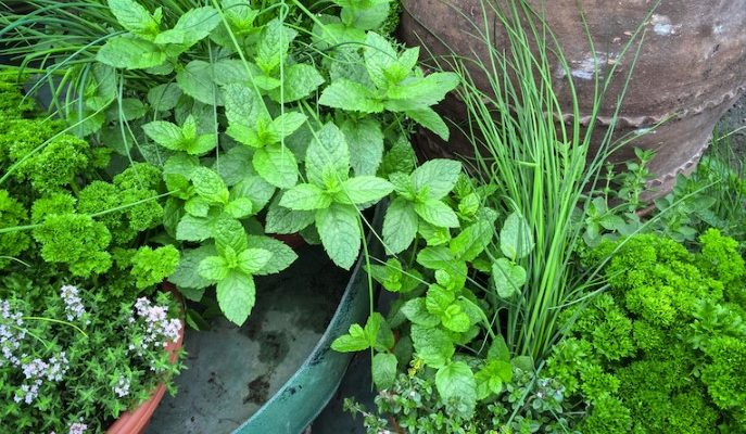 What is the Best Potting Soil for Herbs?