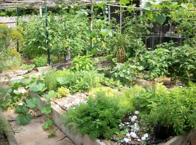 How to Grow an Herb Garden?