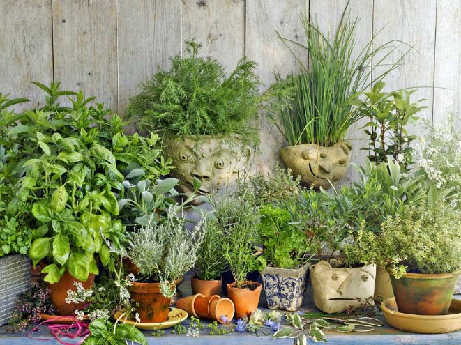 Choosing the herb plants to grow
